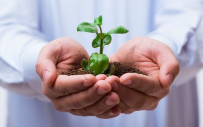Grow Your Employees, Grow Your Business